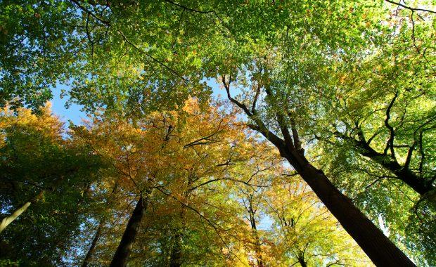 tree tops from below, boomkronen vanaf de grond