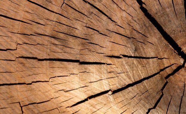 Deel boomstammen Anna's Hoeve gegund aan De Groene Afslag & AltijdWerkplaats