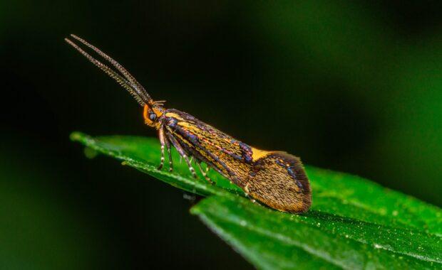 Insectenparadijs aan huis